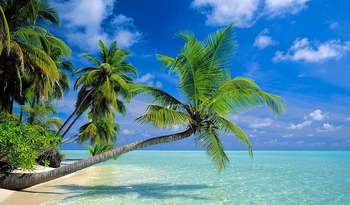 Palm Trees Are Always Associated With Sun White Beaches Vacation And Relaxed Lifestyle In Florida Anywhere You Look Will See Beautiful
