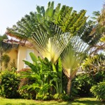 How To Choose Palm Trees