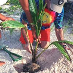 Palm Tree Planting Step-By-Step