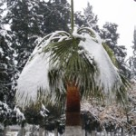 Top 5 Factors Affecting Cold Hardy Palm Tree Growth