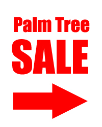 sale1 Palm Trees For Sale