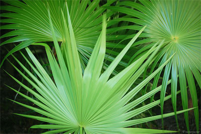 palm_tree_identificaiton1