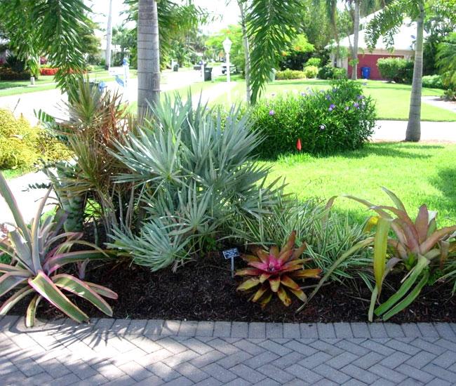 Saw Palmetto Palm Tree (Serenoa repens) in the landscape under a taller palm